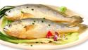 东海生态大黄鱼