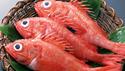 进口石斑鱼