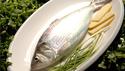进口淡水鲥鱼